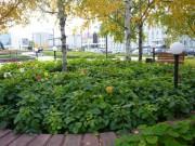 Площадь Городской администрации - Фото из личных архивов сотрудников Центральной городской библиотеки